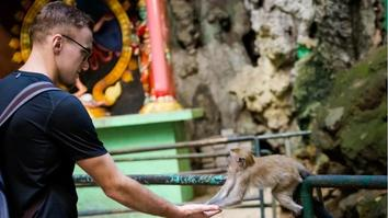 Monkey feeding batu cave temple